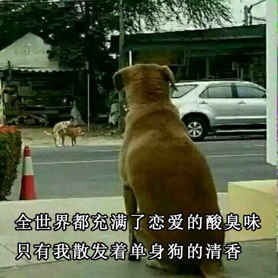 单身狗表情包:全世界都充满了恋爱的酸臭味,只有我散发着单身狗的清香