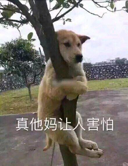 狗子抱树:真TM让人害怕表情包