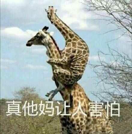 真他妈让人害怕(长颈鹿骑脖子表情包)