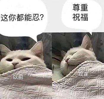 尊重祝福(猫咪版)