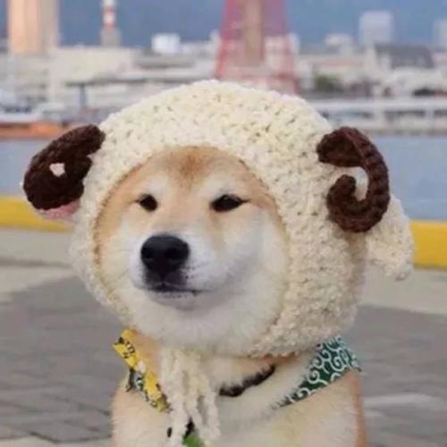 狗子戴帽子冒充羊表情包_柴犬带帽子