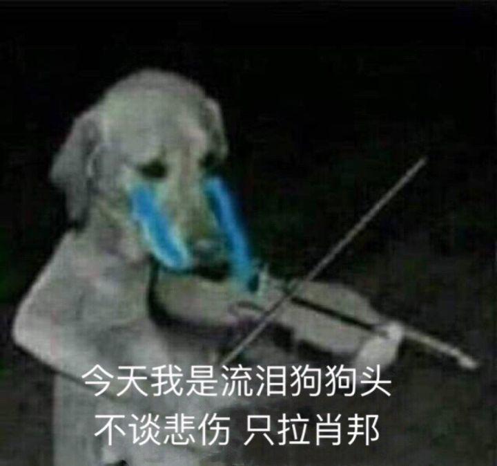 狗子拉小提琴:今天我是流泪狗狗头 不谈悲伤,只拉肖邦