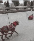 狗子拉车发动机(鸡)