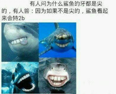 鲨鱼尖牙换成平的之后……2b鲨鱼