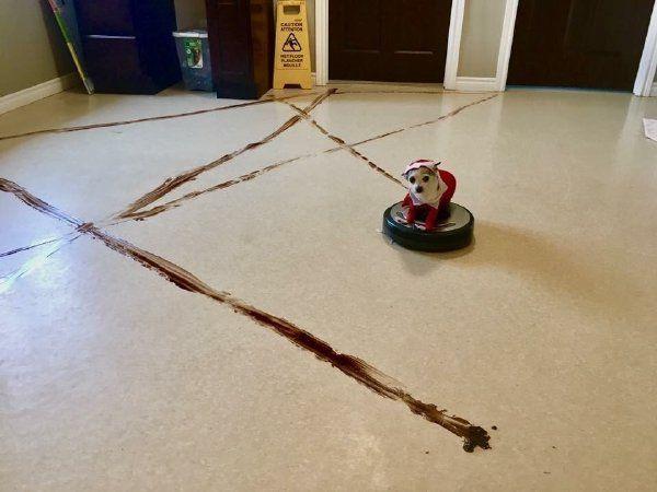 狗子在扫地机器人上拉屎,然后……