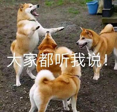狗子:大家都听我说!