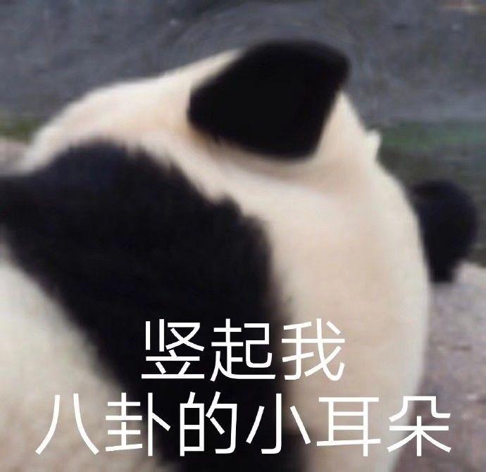 竖起我八卦的小耳朵(熊猫)