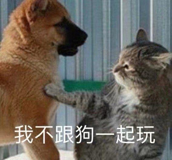 我不跟狗一起玩(猫咪与狗子)