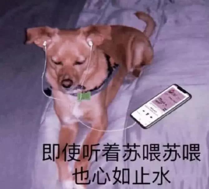 狗子带耳机:即使听着苏喂苏喂也心如止水