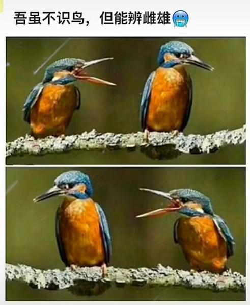 吾虽不识鸟,但能辨雌雄(两只鸟在树上)表情包: